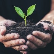 image of seedling to symbolize nurturing of abuse survivors